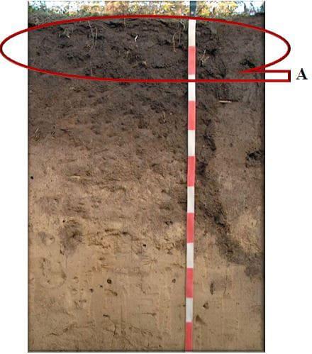 Рис. 4   А  (A<sub>1</sub> или А1 по старой системе) - гумусовый горизонт