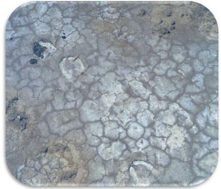 Рис. 6  К-корковый горизонт